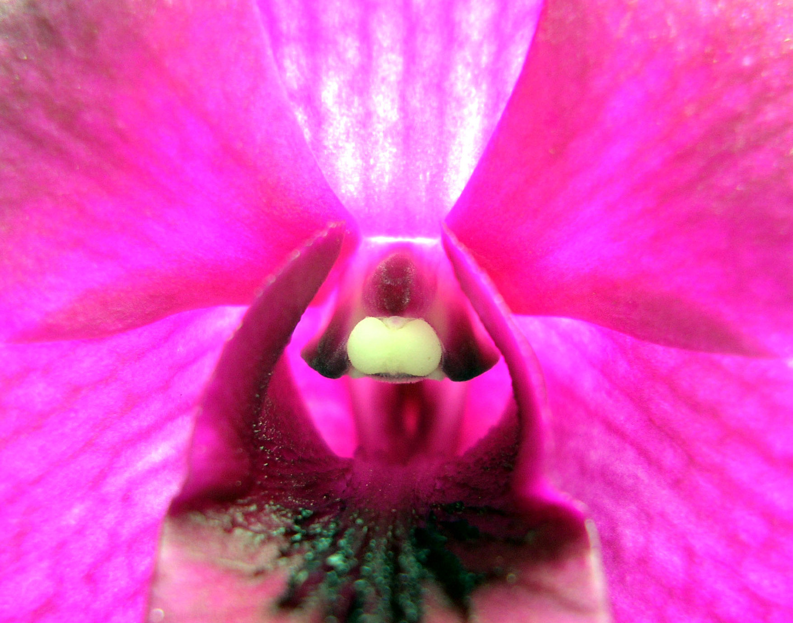 super-close-up-orchid